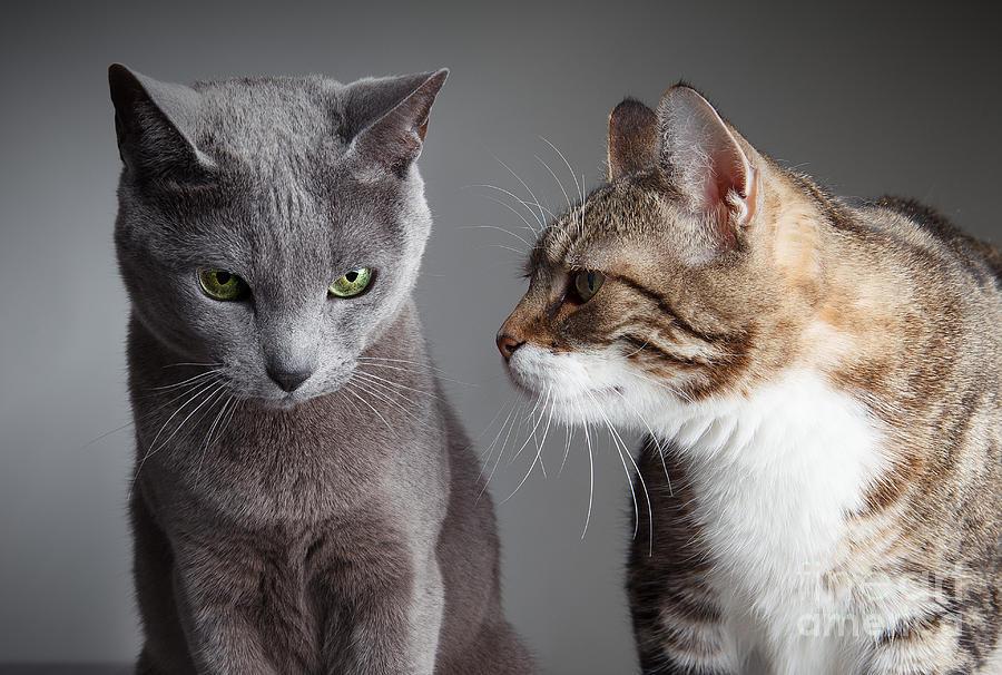 Запознанството на Две Котки