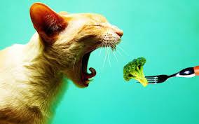 Котка, приготвяща се да изяде броколи