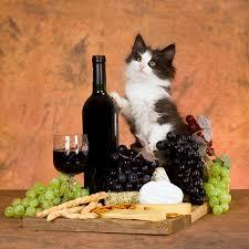Котка, застанала до чаша вино, бутилка и гроздове