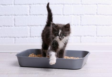 Котката и нейните хигиенни навици