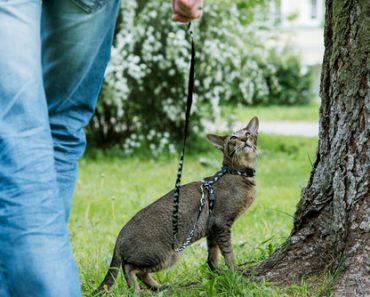 На Разходка с Котка на Каишка – част 2