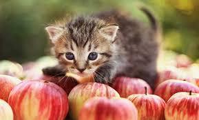 Котенце, което се разхожда върху ябълки