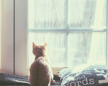 Когато оставяме котката си сама вкъщи