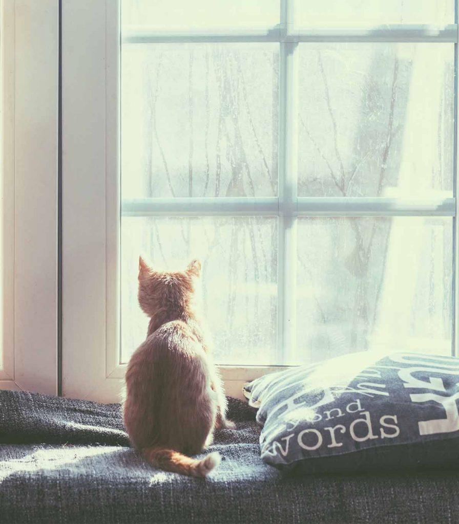 Котка, която гледа през прозореца