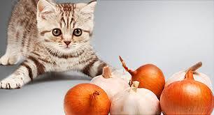 Котенце, което гледа с интерес към лук и чесън