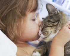 9 Факти, Доказващи как Котката Подобрява Живота Ни