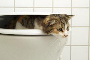 Котка, която е в тоалетната