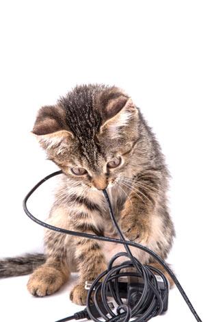 Котка, която се забавлява с кабели