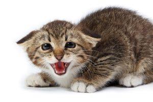 Неспокойна котка