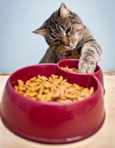 Котките обичат лакомства