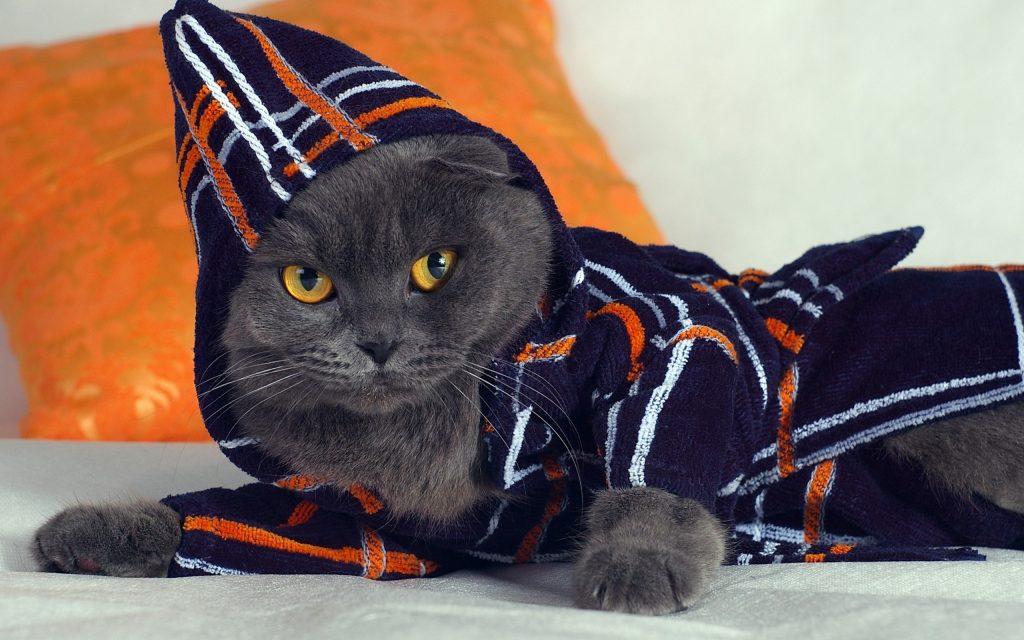 Котка, която носи халат