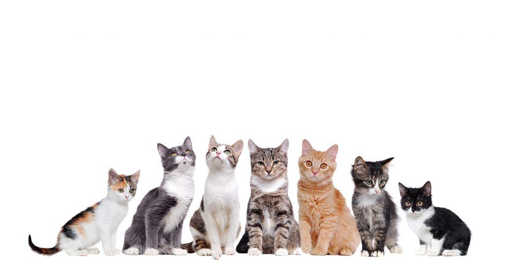 Нашите прекрасни домашни любимци - котки