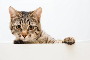 Котка, която гледа тъжно