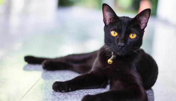 А дали черната котка всъщност не носи щастие?