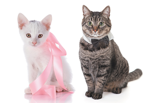 Мъжка котка и женска котарана