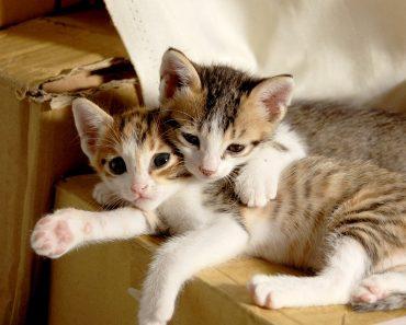 Каква Котка да си Осиновя?