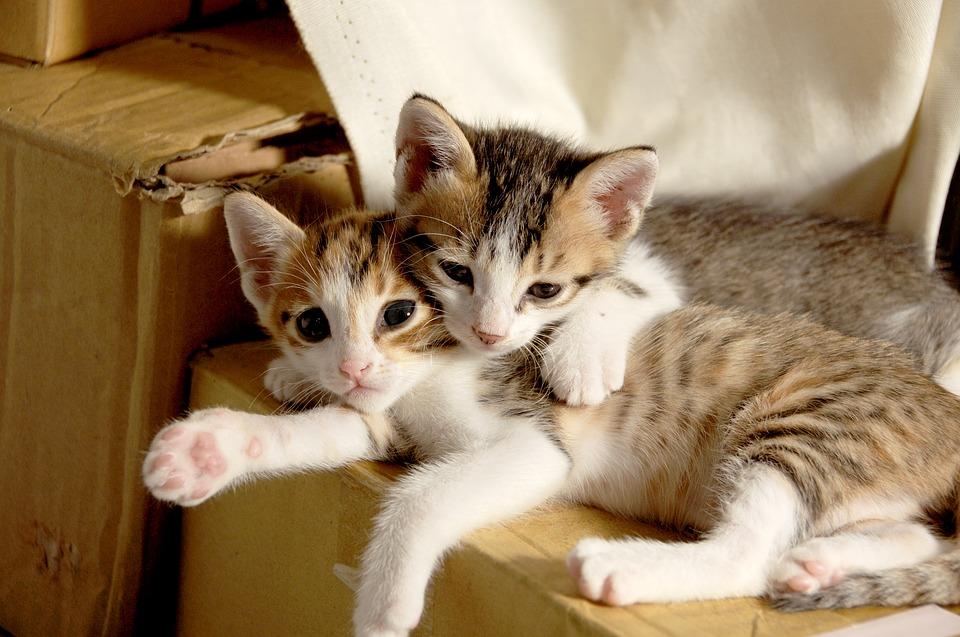 Две котенца, легнали на кашон