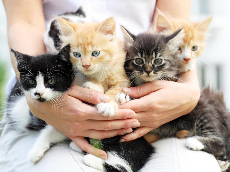 Малки котенца на едно място