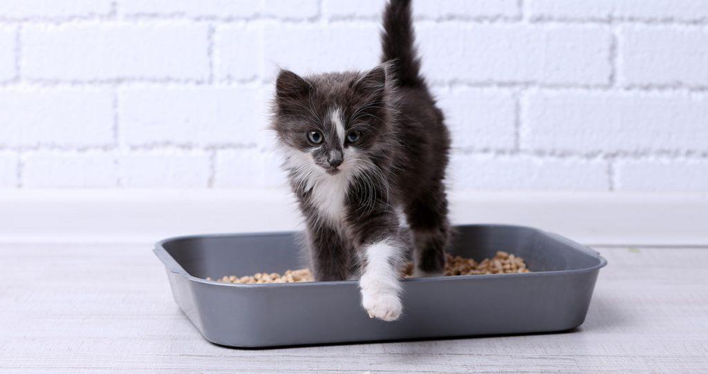 Коте, което не харесва тоалетната си и иска да излезе