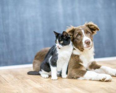 Котките и Техните Имена