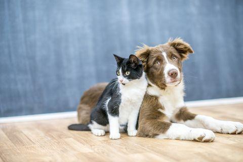Котка или куче - кой разпознава по-добре името си