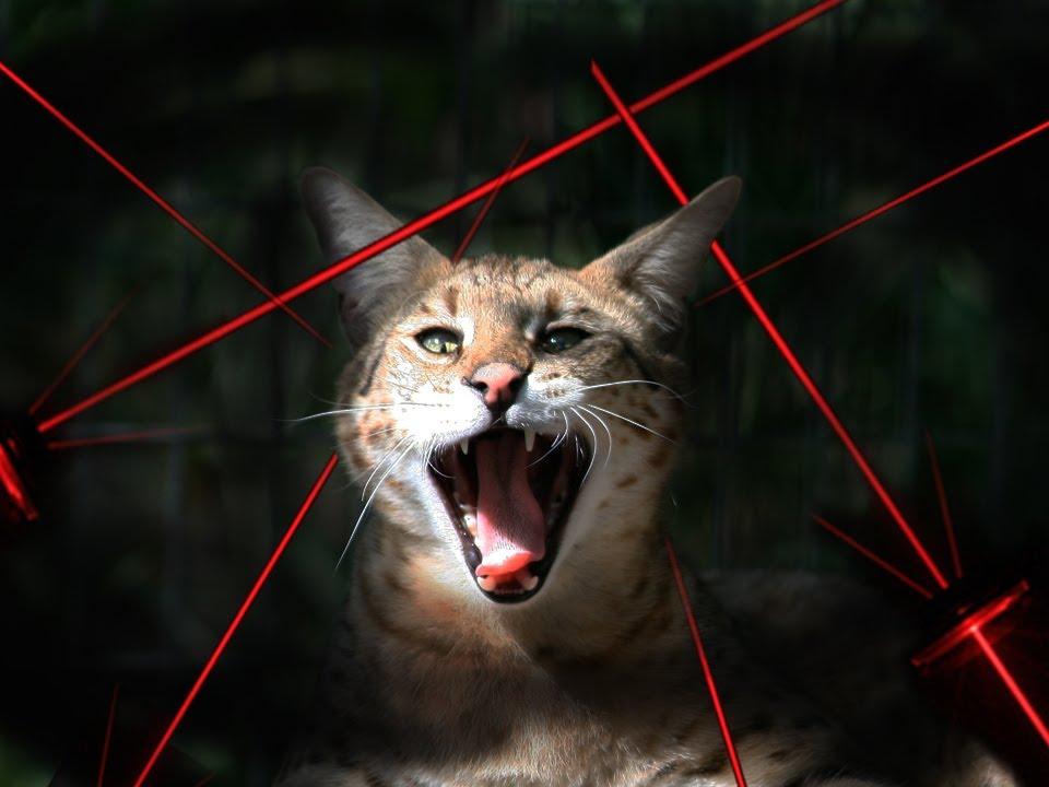 Котка, която е ужасена от много лазери