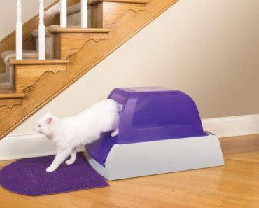 Котешката Тоалетна – Порази Миризмата