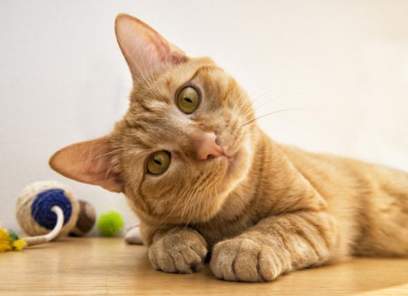 Разпознава ли котката своето име