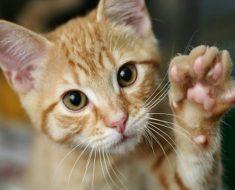 Как да Отучим Котките да Драскат и Хапят