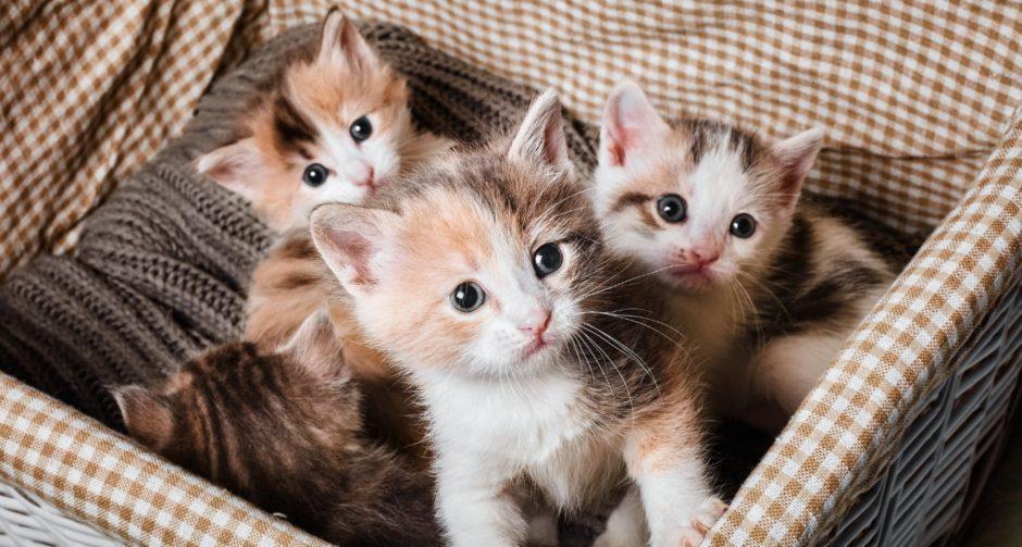 Малки бебешки котенца