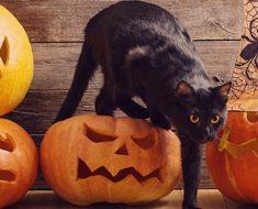 Каква е връзката между черната котка и Хелоуин?