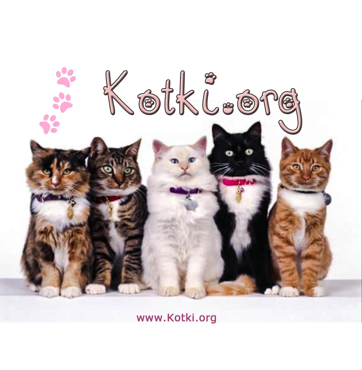 Kotki.org - Редакционен Екип