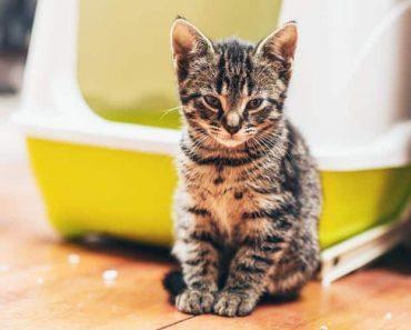 Защо Котката Уринира Върху Всичко?