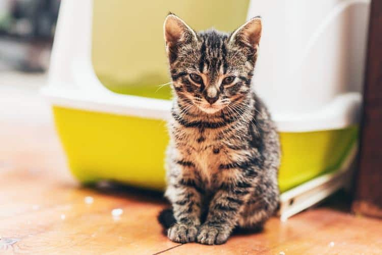 Коте, което явно не си харесва тоалетната