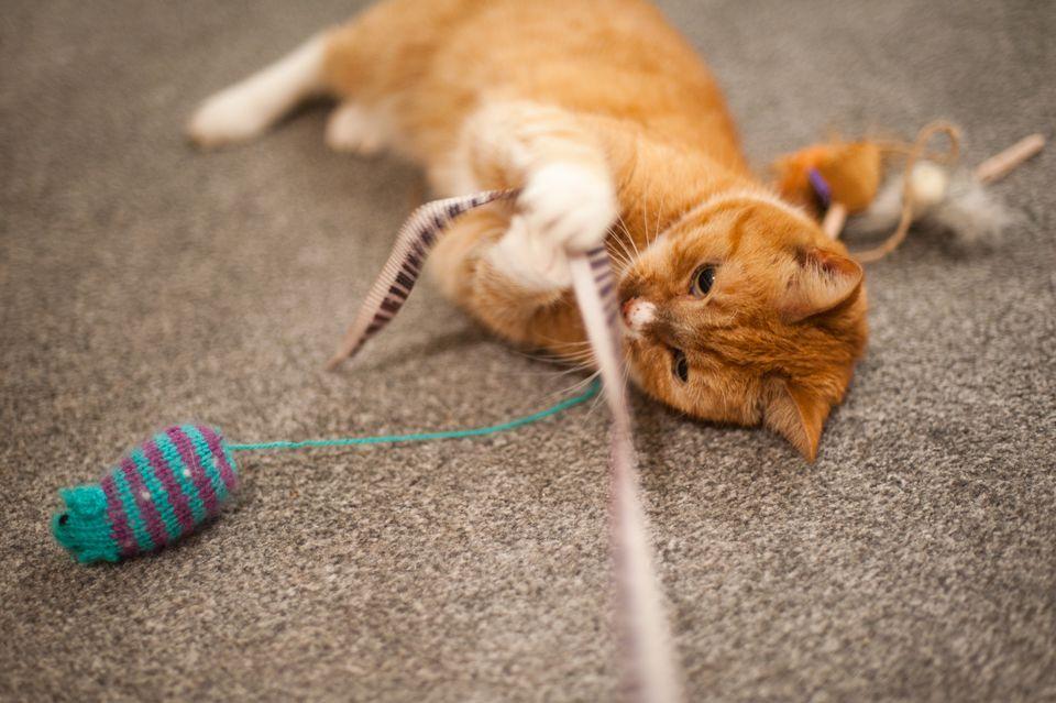 Коте, което си играе с мишка