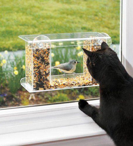 Черна котка, която дебне птица през прозореца