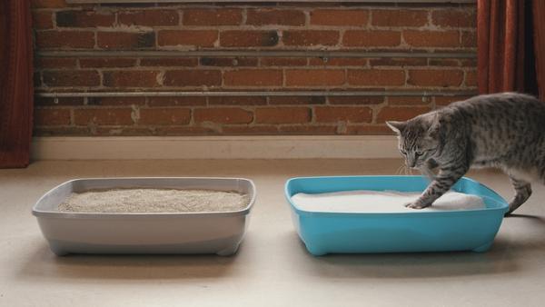 Котката е тази, която избира тоалетната си