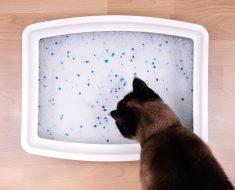 Симптомите при проблеми с пикочните пътища при котките