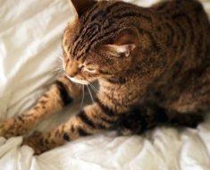 Защо Котките Мачкат с Лапички?