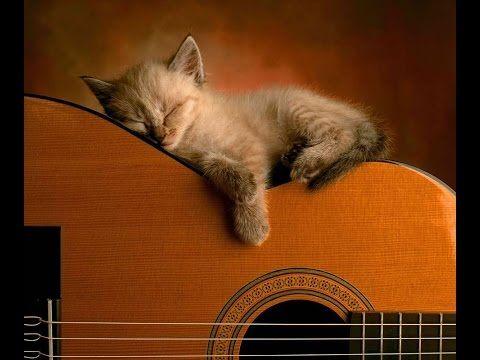 Коте, което спи върху китара