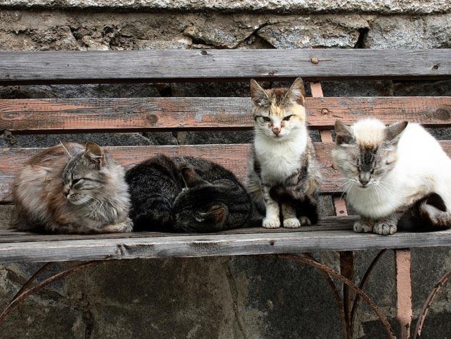 Четери улични котки, които дремят на пейка