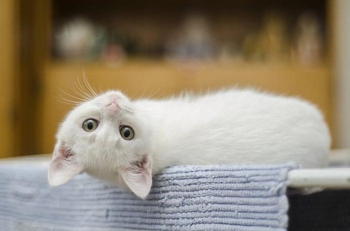 Котка, кочро си лежи на удобно легло
