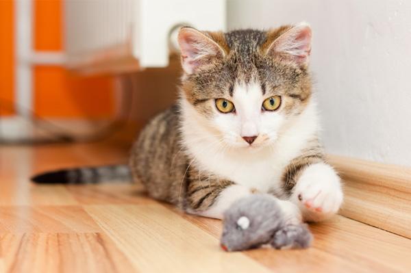Котка, която си играе с мишка