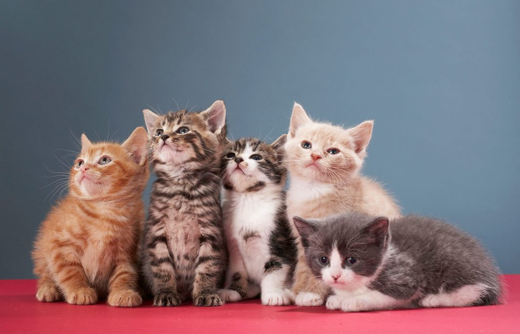 Малки котенца, които лежат върху червена покривка