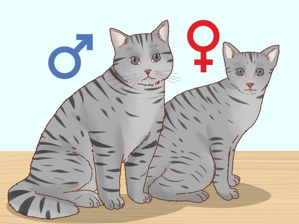 Анимирана снимка с мъжка и женска котка