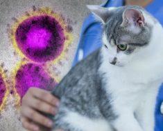 Коронавирусите, COVID-19, Аз и Котката ми