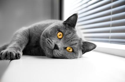 Котка, която лежи на перва на прозорец