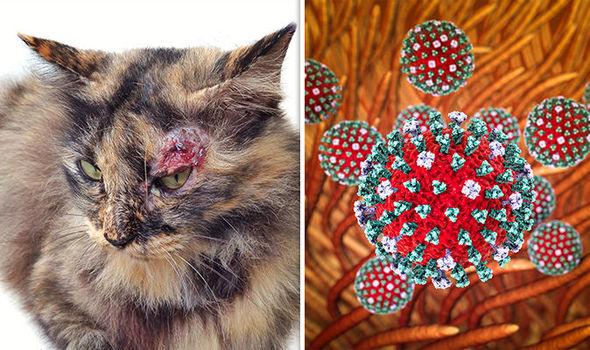 Панлевкопения  при котка