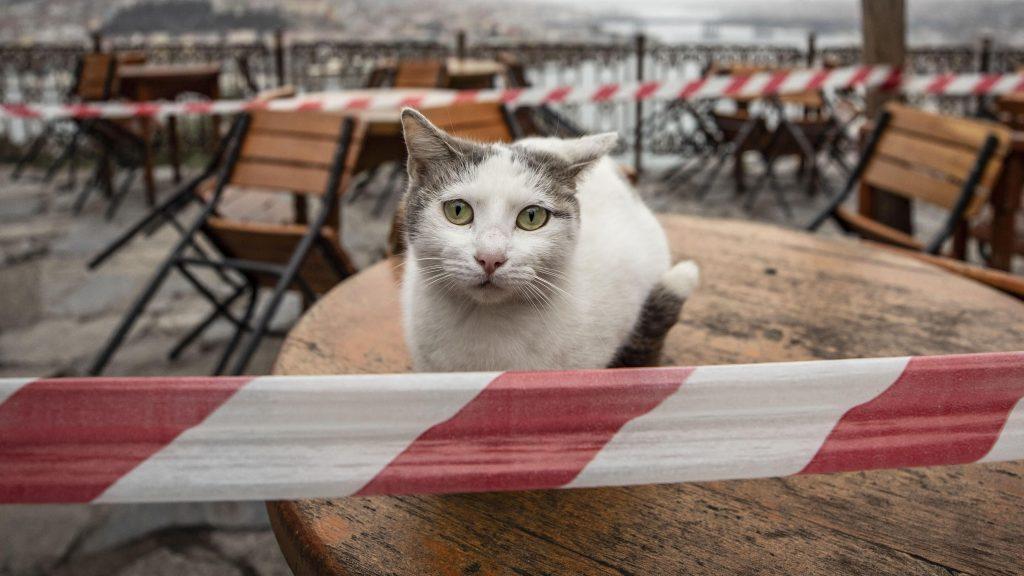 Котка седи на маса, която е обградена от лента за непреминаване