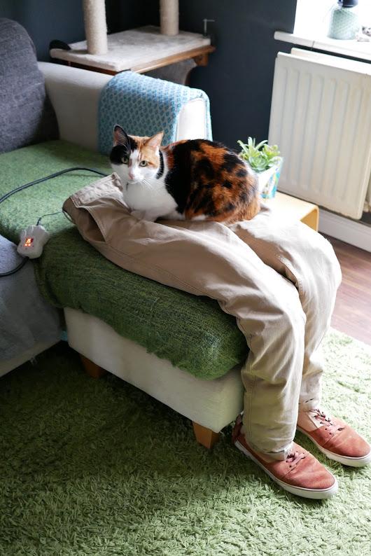 Котка, легнала върху панталоните на собственика си